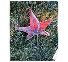 Maple Leaf in the Morning Frost Poster