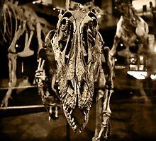 Velociraptor by kym banks
