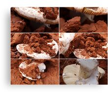 Cobar Toadstool collage Canvas Print