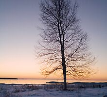 Lone Tree at Sunrise on a frozen Lake Michigan Shore by Randall Nyhof