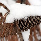 Pine Cone and Snow by Sherry Durkin