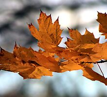 Fabulous Autumn by SharonLMadison