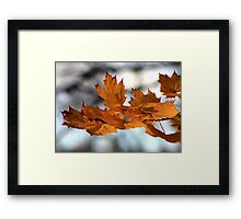 Fabulous Autumn Framed Print