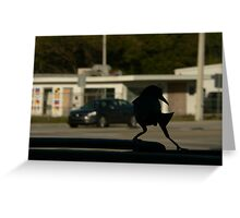 tip toe . on the suv Greeting Card