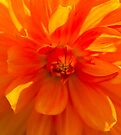 Orange Burst by Deborah McGrath