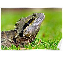 Iguana - Currumbin Wildlife Sanctuary Poster