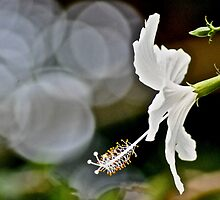 Her Bokeh focus in the garden...: On Featured: A-meaningful-moment Group by Kornrawiee