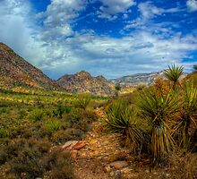YUCCA TRAIL by Stephen Campbell