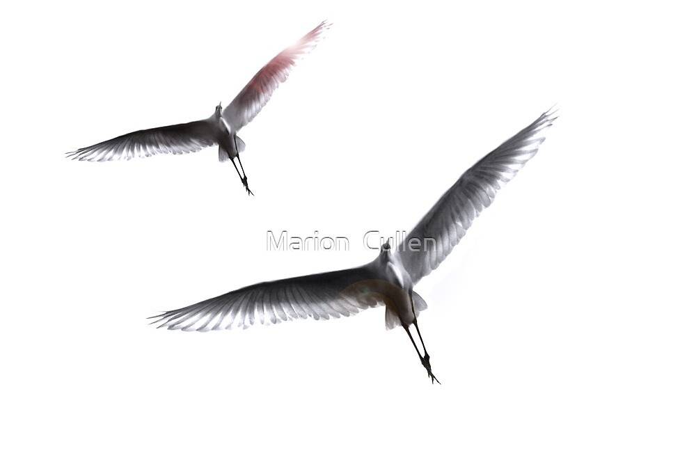 Dance of the Egrets by Marion  Cullen