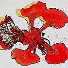 Flamboyant flower by islefox