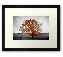 A Tree in Autumn Framed Print