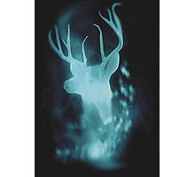 Stag Spirit Guide Photographic Print
