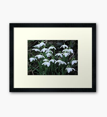 Is Spring On The Way Framed Print