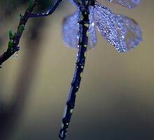 Waiting For The Morning Sun by Natalie Ord
