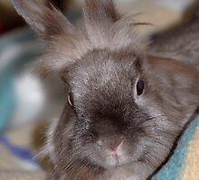 Bunny Finchen by vbk70