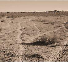 DESERT TRACKS - Botswana/Kalahari by Sandy Beaton