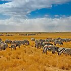 Ngorongoro Crater by Konstantinos Arvanitopoulos