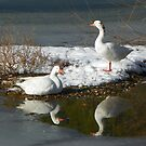 Reflections of us, Be my Valentine's girl by David  Hughes