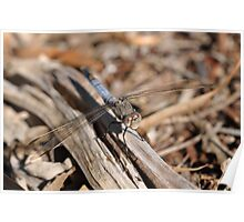 Dragonfly Smile Poster