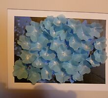 Hydrangea with a difference by hilarydougill