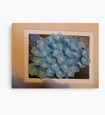 Hydrangea with a difference Canvas Print