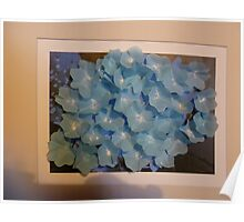 Hydrangea with a difference Poster