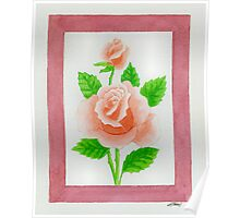 HYBRID TEA ROSE CARINELLA - AQUAREL Poster