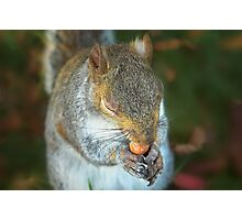 This nut is exquisite! Photographic Print
