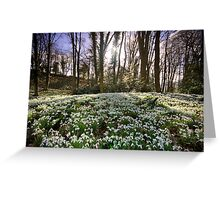 Snowdrop Woods Greeting Card
