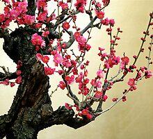 UME   BONSAI  ,2 (Japanese Plum )   OSAKA by yoshiaki nagashima