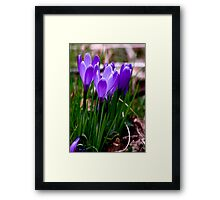 Just Purple (Spring late April) Framed Print