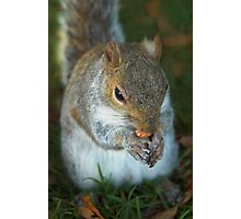 Nut - Yummy Photographic Print