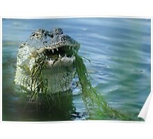 GATOR with mustache Poster