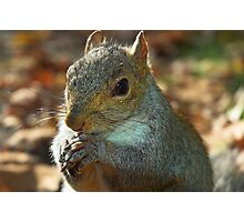 Squirrel posing with nut Photographic Print
