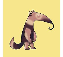 Cute anteater  Photographic Print