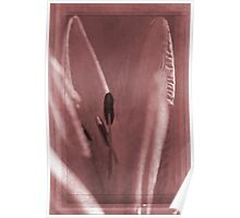 Muted Pink Lily Poster