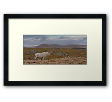 Brecon Beacons Pony (viewed 110 times) Framed Print