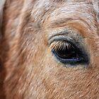 Gentle Horse - Close up by Hilda Rytteke