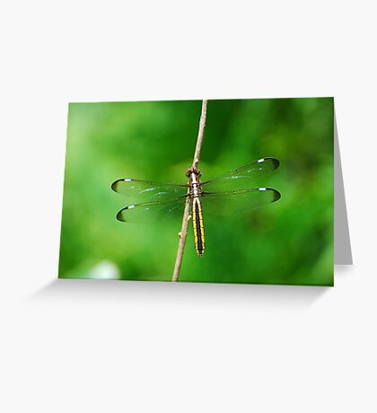 Spangled Skimmer Greeting Card