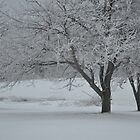 Winter trees with hoar frost by mltrue