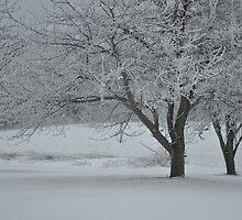 Winter trees with hoar frost by mltrue