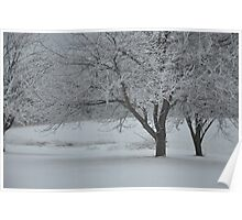 Winter trees with hoar frost Poster