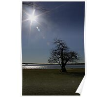 Solitary Tree in Jamestown, Virginia. Poster