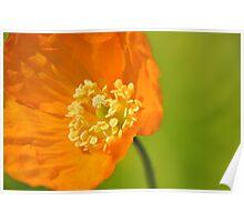 Orange Winds Poster