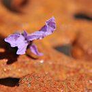 Rusty Lavender by Hilda Rytteke