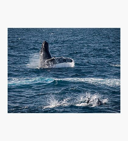 Playful sea mammals Photographic Print