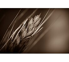 Grain Photographic Print