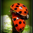 Love Bugs Lol by AngieBanta
