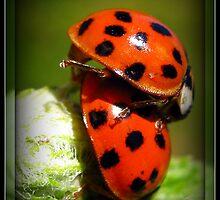 Love Bugs Lol by AngieBanta