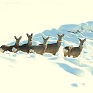 Oh, deer! by Ritva Ikonen